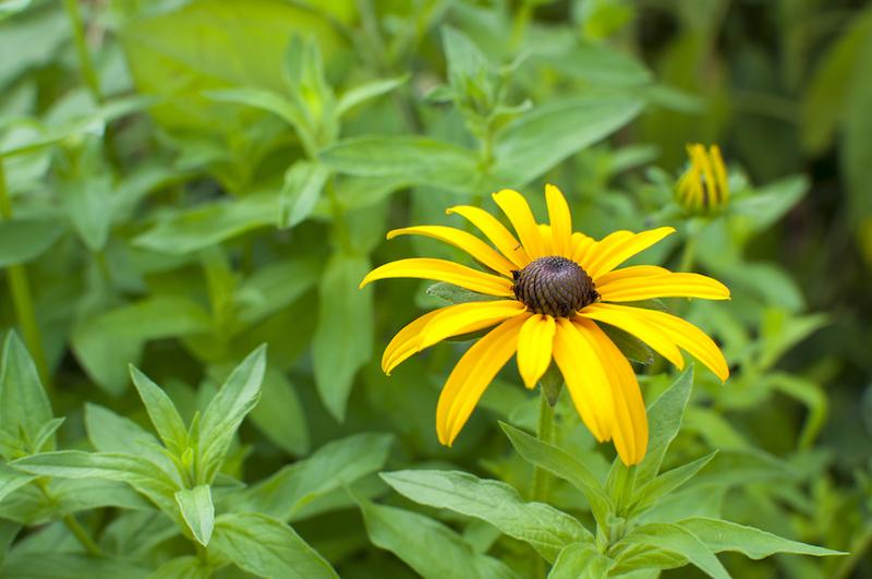 Yellow Flower Infostil Online Shop